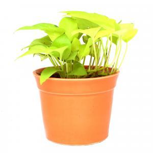 golden heart bucket with orrange pot