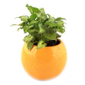 FOOTBALL YELLOW